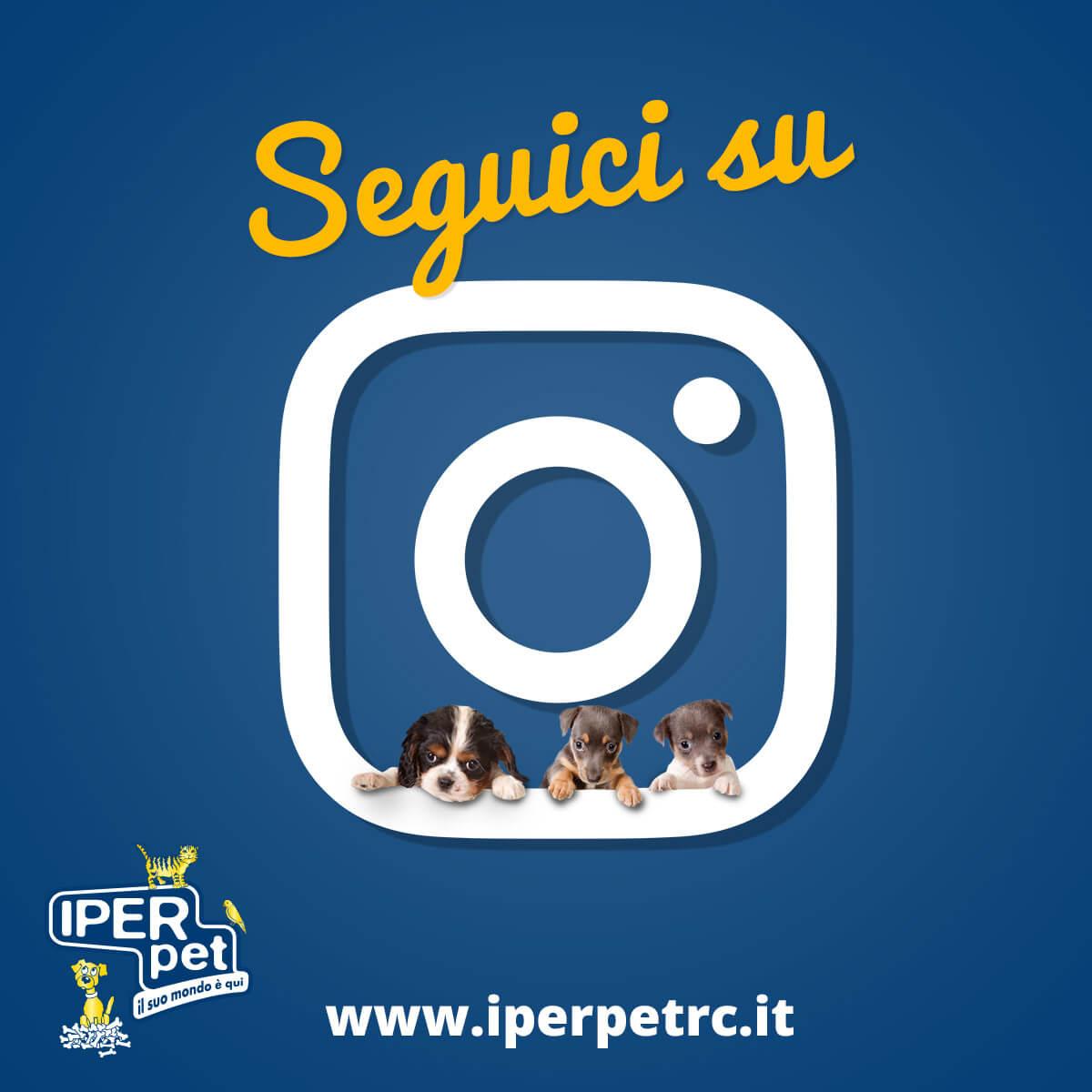 Iper Pet il negozio per animali di Reggio Calabria adesso ha un profilo instagram