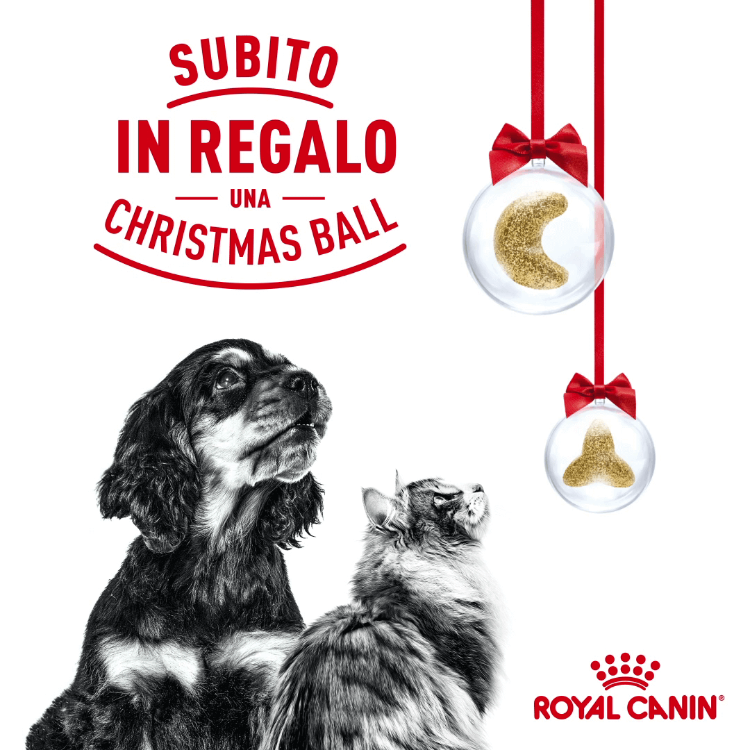 royal canin christmas ball
