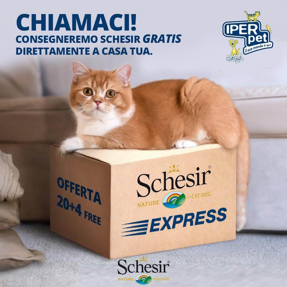 schesir consegna a domicilio cibo gatti